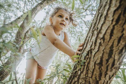 Little girl climbing willow tree - MFF06296