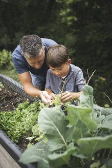 Mature man assisting son in gardening raised bed at back yard - HMEF01083