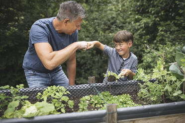 Happy boy giving fist bump to father while holding plant with trowel by raised bed in garden - HMEF01086