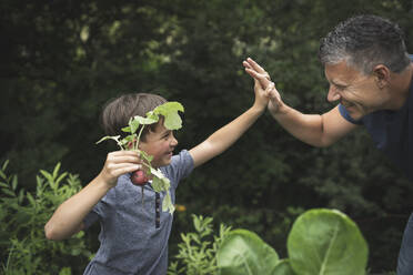 Happy boy giving high-five to father while holding radish in garden - HMEF01095