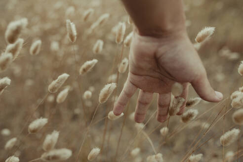 Unrecognizable crop tender person gently touching dry stems of plants in meadow in summer - ADSF16690