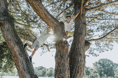 Brothers climbing on pine tree in public park during sunny day - MFF06396