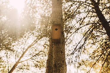 Wooden birdhouse on tree trunk in park - ERRF04595