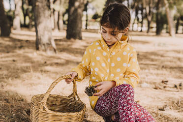 Girl kneeling while collecting pine cone in wicker basket at park - ERRF04607