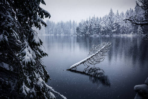 Scenic winter landscape of calm lake and snowy coniferous forest reflected - ADSF17054