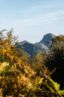 Autumn trees with peaks of Picos de Europa range in background - JMPF00491
