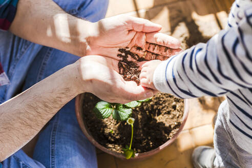 Father and 1 year-old son planting strawberries in a pot in a balcony - FLMF00316