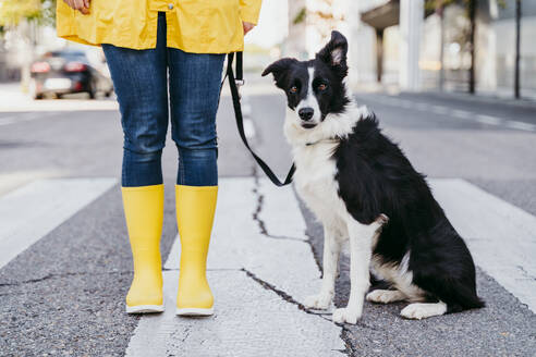 Woman standing with dog on pedestrian crossing during sunny - EBBF01231