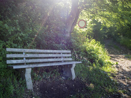 Empty bench along forest trail - HUSF00175