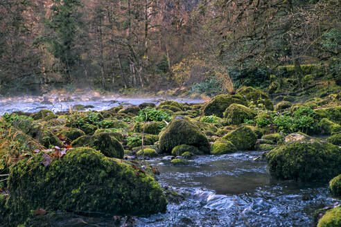 Lupshara River flowing past moss-covered boulders in Ritsa Relict National Park - KNTF06064