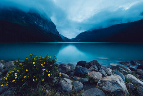 A moody evening at Banff's Lake Louise with yellow flowers - CAVF91677