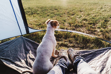 Dog sitting by legs of mid adult woman in tent - EBBF02193