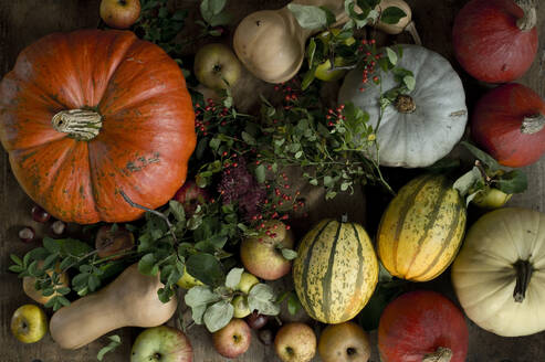 Still life of large variety of fresh pumpkins, squashes and other fruits - ASF06685