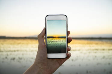 Young woman photographing sunset over rice paddy at Ebro Delta through smart phone - AFVF08084