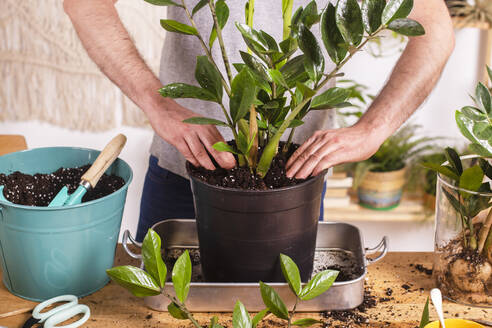Man putting mud in Zamioculcas Zamiifolia flower pot while gardening at home - RTBF01536