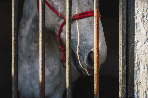 Horse wearing bridle standing by gate in stable - RSGF00510