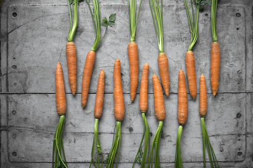 Row of fresh carrots lying on gray wooden surface - ASF06720