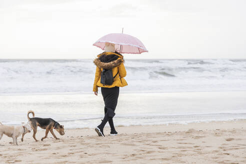 Young woman holding umbrella walking with two dogs along sandy coastal beach - JRVF00278