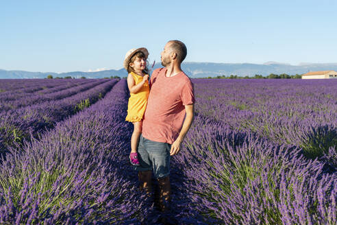 Father carrying baby daughter in vast lavender field during summer - GEMF04701