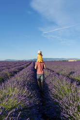 Little girl on shoulders of father in a lavender field at afternoon in Valensole, Provence, France - GEMF04704