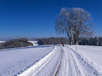 Germany, Black Forest, Freiamt, Person hiking on Schillinger Berg in winter - LAF02688