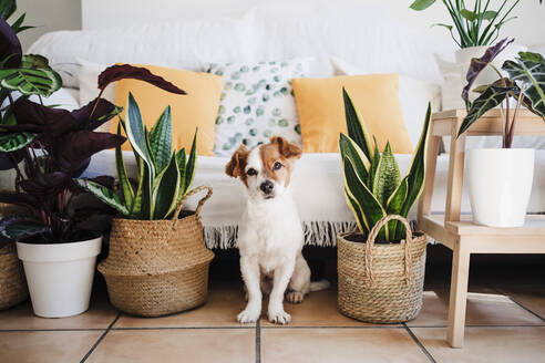 Puppy sitting by plant decoration at home - EBBF02523
