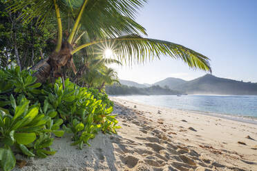 A famous tropical beach with Palm Trees at Baie Lazare. Baie Lazare, Mahe, Mahe Island, Seychelles, Indian Ocean, Africa. - RUEF03214