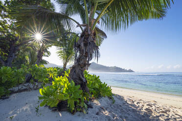 A famous tropical beach with Palm Trees at Baie Lazare. Baie Lazare, Mahe, Mahe Island, Seychelles, Indian Ocean, Africa. - RUEF03217