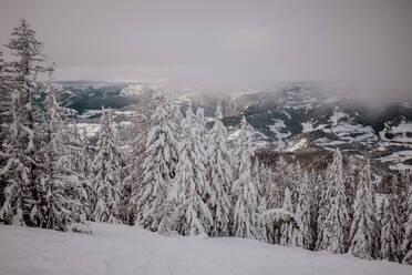 Skitour mit viel Neuschnee. Österreich, Kärnten, Gerlitzen (Berg), Villach - DAWF01782