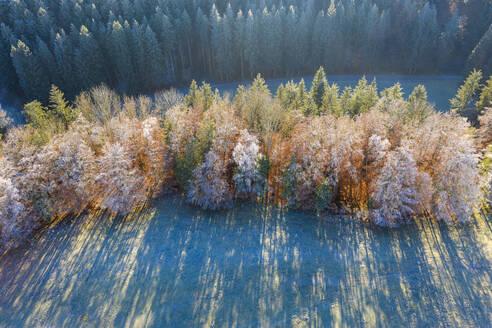 Baumgruppe mit Raureif, Herbststimmung, Reichertshausen, T�lzer Land, Luftbild, Oberbayern, Bayern, Deutschland - LHF00850